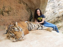 Making friends with a tiger